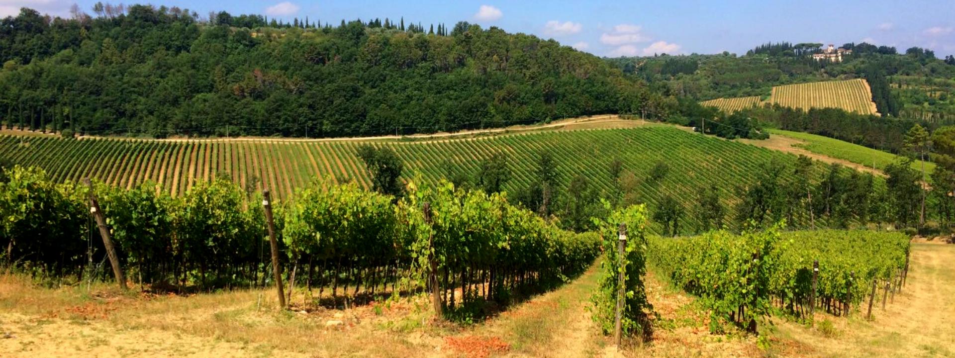 Progetto LIFE Green Grapes